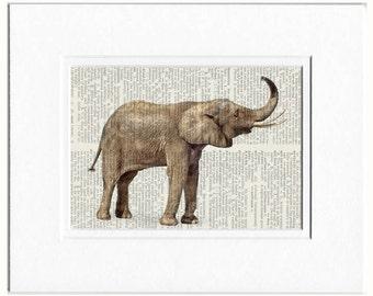 baby elephant photo