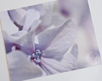 Photograph Print - Blue Hydrangea