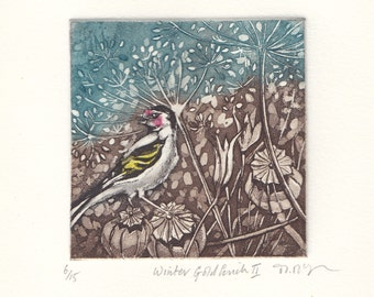 Goldfinch, original etching, printed in colour.