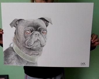 Original dog pencil illustration - Pug illustration 29.7 x 42 cm