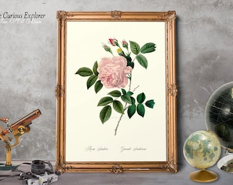 Rose Print, Pink Rose Print, Floral Decor, Gift for Mom Decor, Love Gift Art Prints, Rustic Rose Print, Rose Art Print, Rose Girl  - E11_25