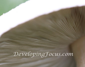Mushroom Macro Photo Art Photograhy Card or Print Download, Mushroom Gill Closeup Photo Art Decor Download