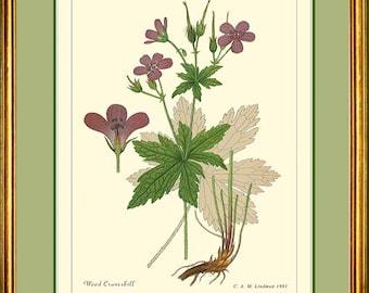 WOOD CRANESBILL - Vintage Botanical print reproduction 215