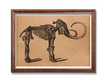 Antique Mammoth skeleton print Anatomy poster Anatomical decor