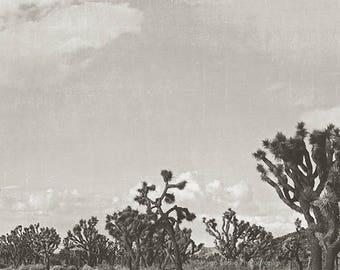black and white Joshua Tree print, desert photography, California wall art, minimalist home decor, boys room, gray, for him, landscape photo