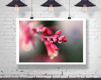 Photograph - Pink Bluch Cherry Blossom flower with water drop Macro Fine Art Photography Print Wall Art Home Decor