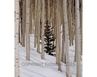 Tree Time: Handmade Photography Card (set of 5)