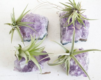 Bridesmaids Gift, Air Plants on Amethyst Crystal Chunks, Wedding Favor Set of Four, Other Amounts Possible, Girl Gang Gift Idea