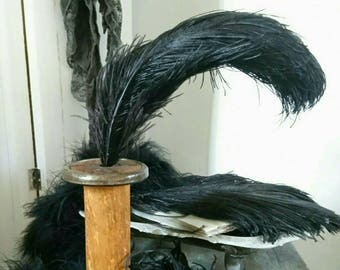 Vintage ostrich feathers. Black ostrich plumes. Hat making. Millinery feathers. Display.