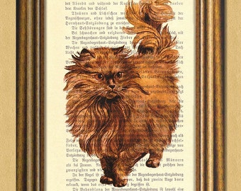 MY PERSIAN CAT -Dictionary art print- Wall Decor -Vintage book page print recycled