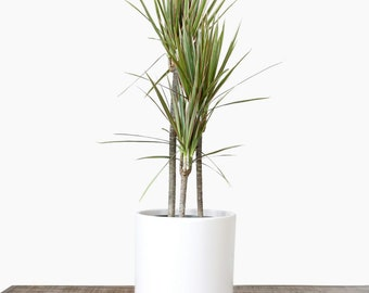 "Large Plant Pot - Indoor Planter | Ceramic Flower Pot| Modern Planter - Perfect for Wood Plant Stands (White - 6"", 8"" & 10"" sizes)"
