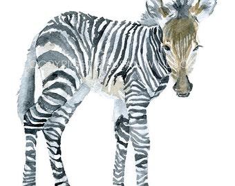 Baby Zebra Watercolor Painting - 8 x 10 - Giclee Print - 8.5 x 11 - African Animal Art