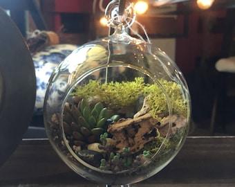 Hanging Succulent Terrarium DIY Kit