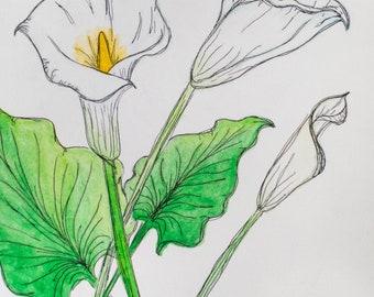 Calla Lilies - watercolor painting print