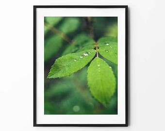 Drop of water on leaf | Fine art print photography | Nature Serene decoration | Macro depth of field | Wall art, bedroom meditation, YOGA
