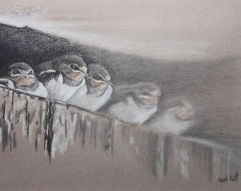 Pastel drawing of swallow fledglings (original)