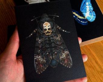 Greetings Card - Acherontia atropos 'Death's Head Moth'