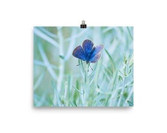 Blue Desert Butterfly