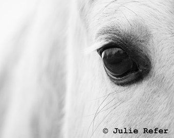 Black and White Horse Photograph