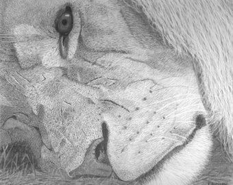 Reflection - Original graphite portrait of a lion