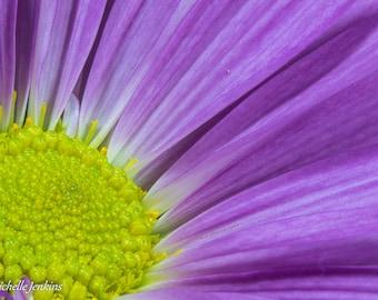 Purple Bloom Nature Print, Flower, Yellow, Macro, Petals