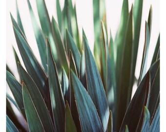Art Photograph - Floral Photography - Nature Photograph - Fine Art Photograph - September Glow -Green Art - Botanical Print - Wall Art