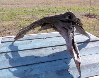 Lakeshore Driftwood Piece OOAK Interesting Root and stump piece  great for display or nice piece for Taxidermy  218-26