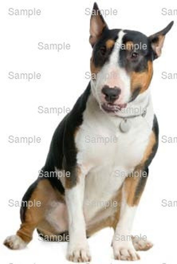 Bull Terrier Dog Birthday - Edible Cake and Cupcake Topper For Birthday's and Parties! - D6620
