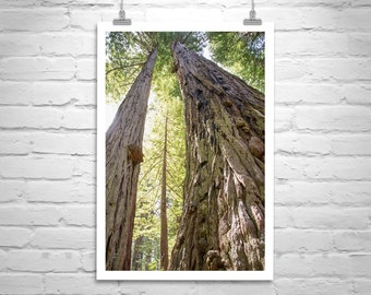 Redwood Tree Art, California Redwoods, Forest Picture, Tree Art, Redwood Forest Picture, Redwood National Park, Coastal Redwoods Art
