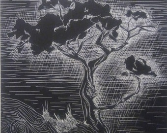 Juniper on scratchboard