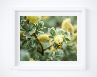 Bumblebee print - Insect photography - Green wall art - Spring home decor - Botanical floral photo - Girlfriend photo gift - Yellow bee art