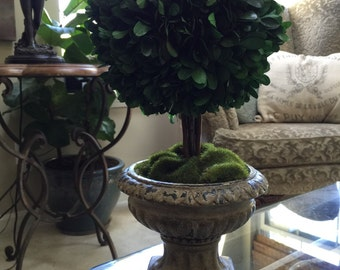 Natural Preserved Boxwood Topiary