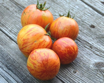 Red Zebra Tomato Seeds, Heirloom Tomatoes, Open Pollinated Tomato Seeds, Great for Container Gardens and Urban Gardening