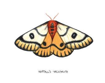 Nuttall's Sheep Moth (Hemileuca nuttalli)