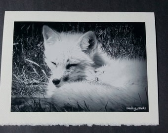 Card greetings/wishes card, handmade, photo card, Fox, animals, black & White Photo, Saint-felicien, zoo, party.