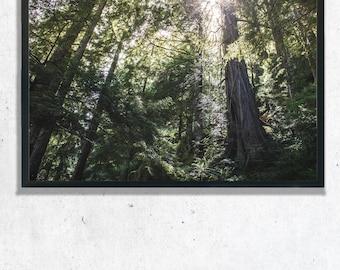 Sun Light in Trees Photography Print, Wall Art