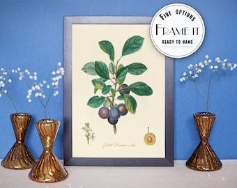 "Vintage illustration of blueberries - Framed Vintage Botanical print, Plant illustration, Botanical art, 8""x10"" ; 11""x14"", FREE SHIPPING 005"