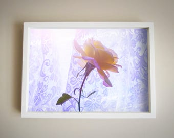 Rose | Colour | Rinko Kawachi Inspired | Home Decor |