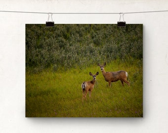 Deer Photo, Wildlife Photography, Animal Country Art, Doe Deer