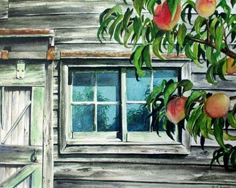 Old Barn Window with Peaches - Limited Edition Print