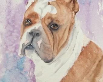 Custom watercolour painting of British Bulldog