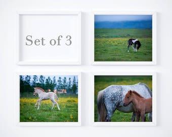 Nursery wall decor set - Foals print set of 3 - Sale 25% OFF - Iceland baby horse photos - 5x7 8x10 wall art - Farm art set - Photo prints