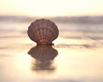 Calming Wall Art Seashell Decor Sunset Photography California Beach Photo Shell Print Home Decor Seascape Peaceful Ocean Beach Photography