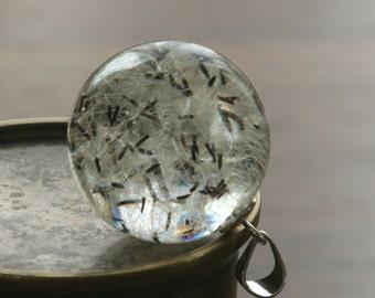 Hieracium- dandelion pendant