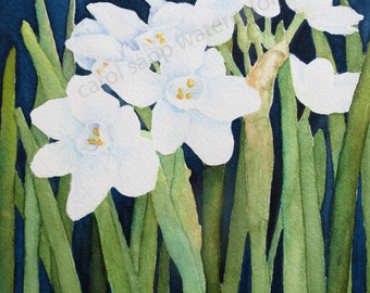 paperwhites watercolor-paperwhites painting- flower painting-archival print-white flowers painting-narcissus painting-narcissus watercolor