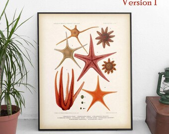 Vintage nautical print, Starfish illustration, Marine art, Digital print, 8x10 print, 11x14 print, Nautical decor, Printable nautical art