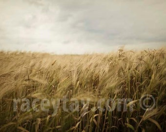 Photo of Wheat Field, Nature Photography, Gold, Gray, Rustic Wall Art, Fall, Kitchen Decor, Rustic Home Decor, Farm