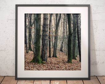 Landscape, forest, trees, digital printable download, decorate house, decorate office, decoration for room, printable poster, decorate wall