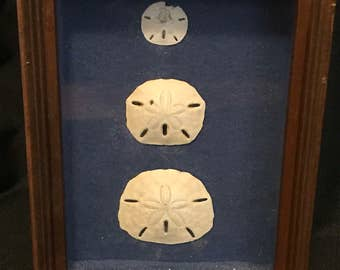 Vintage Shells Beach Sand Dollars Beach Decor 1960's Wall Hanging SALE PRICE was 30.00 now 15.00