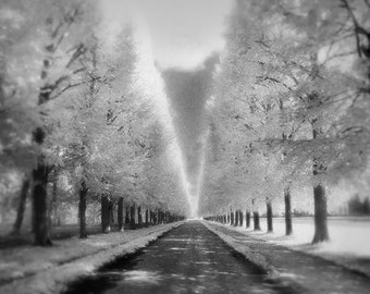 Versailles Photography, Black and White Trees, High Key Photo, Infra-Red Film